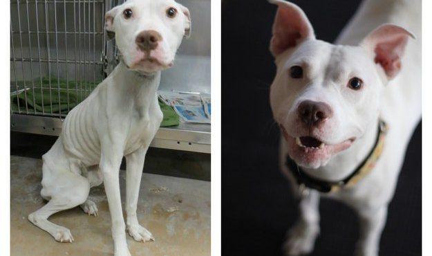 perro antes y despues