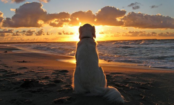 perro en playa